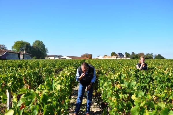 Thomas Duroux during Bordeaux wine harvest