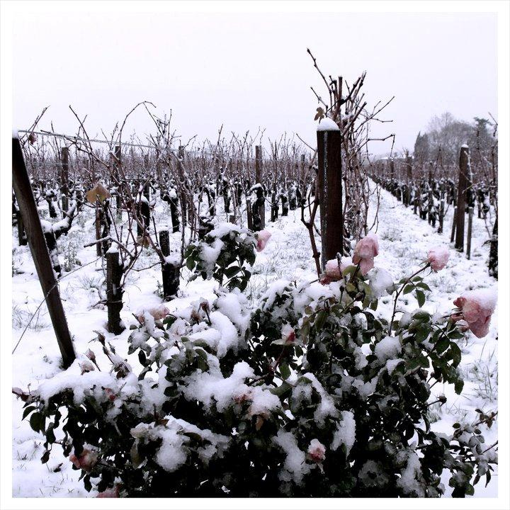 bordeaux snow