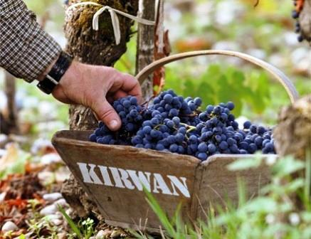 Chateau Kirwan Bordeaux Harvest