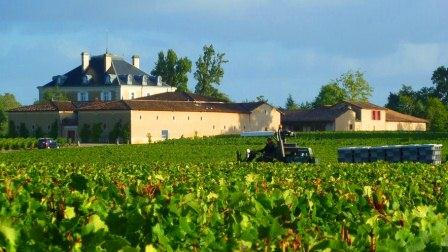 2012 Haut-Bailly Harvest