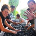 2012 Grand Puy Ducasse Harvest Sorting